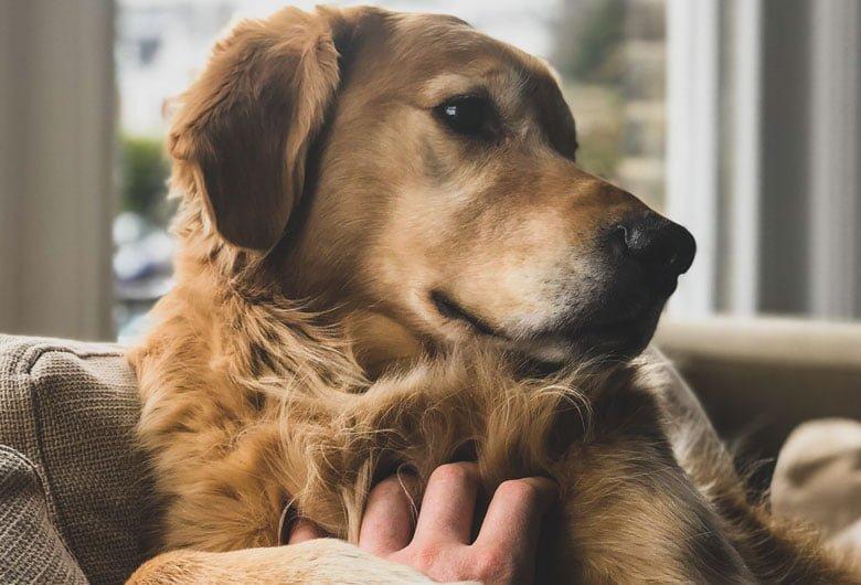 köpek eğitimi