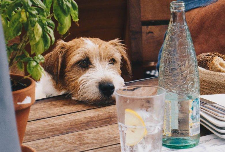 köpek eğitimi yemek duzeni