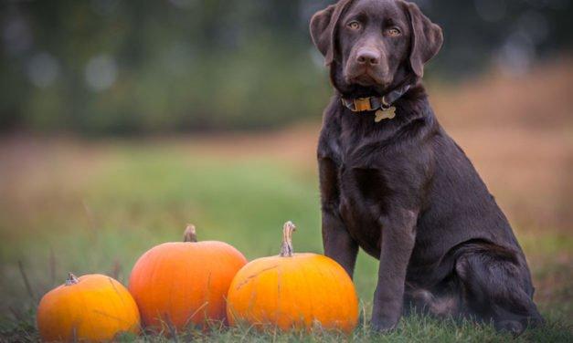 Köpeklerde Gıda Alerjisi – En Sık Görülen 11 Gıda Alerjisi