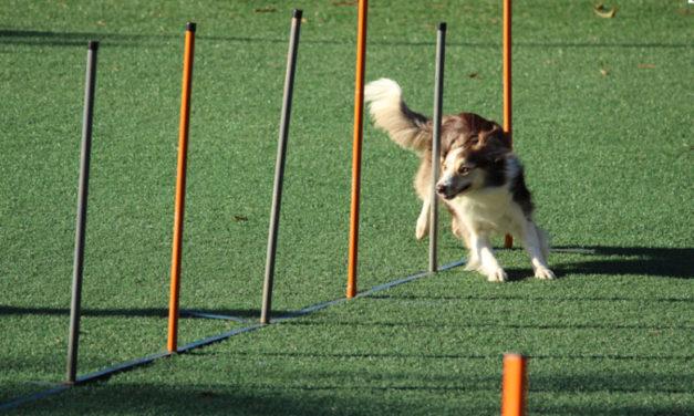 Bonynin Yolu PDF – Köpek Eğitim Kitabı